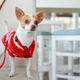 犬も嫉妬をする(厳密には、嫉妬のような行動)〜動物行動学者による解説