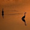 🐤夕焼けと鳥🌆この時期に海外出張⑦