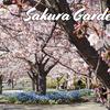 【桜情報2019】幻想的なお花見さくら広場 / Sakura Garden @幕張(千葉)
