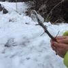 木の枝に氷が絡みついて、水飴みたい♡【雪国の子どもの遊び】