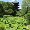 世界文化遺産「東寺」スナップ写真 2019