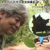 養老孟司先生、コロナ以前にアナフィラキシー体験してた。