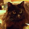 猫ログ:今日の王子2