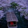 京都・伏見 - 伏見・豪川の春景色