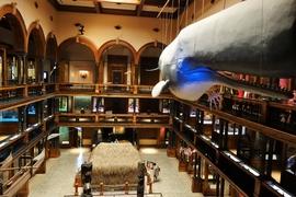 歴史から様々なハワイの側面を知ることが出来る「ビショップミュージアム」:特別展示「元年者」から学ぶ日本との関係とは?アクセスや併設のカフェ情報も紹介!