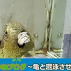 【経験談!】亀と混泳出来る熱帯魚を振り返る ガメと魚が仲良し?