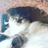 なぜミアキスは性格も見た目も違う犬と猫に分かれたのだろう?