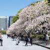 皇居前広場 の 八重桜に囲まれる #THETA