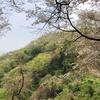 春の花と芽吹きの頭高山、渋沢丘陵の尾根を歩く