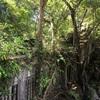 #アンコールワット個人ツアー(411) #アンコールワット観光のおすすめ現地ツアーベンメリア遺跡