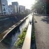 【散策】東京都大田区池上を行く。 ~お寺、教会、つつじ~