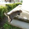 7月後半の #ねこ #cat #猫 その4