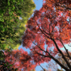 【紅葉を見に行く旅】千葉の本土寺に行ってきました