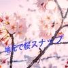 【ゆる〜い撮影記】地元で撮影した桜スナップ!