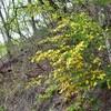 「佐久の季節便り」、「岩村田公園(岩村田城址)」で、「太田道灌の故事」を語る…。