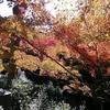 京都で本気で「紅葉狩り」
