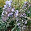 春の花々(2)