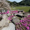 BIKE 26km 芝桜見物