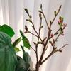 サロンの桜ももう少しで開花♡