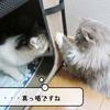 猫雑記 ~むくの接待~