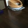 猫専用掃除機