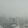 雪、キタ━(゚∀゚)━!