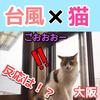 台風に興味津々な猫!初めての台風にビビりまくる猫の様子はこちら【動画あり】