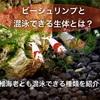 ビーシュリンプと混泳できる生体とは?稚海老とも混泳可能な生体紹介