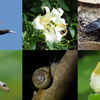 伊豆諸島の島嶼生態学を研究するチームによる学術的クラウドファンディングが開始
