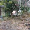 京都の迎賓館といわれる庭園と太閤殿下の遺構を散策