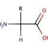 品質科学 No.2 タンパク質 Part2(アミノ酸の基礎)