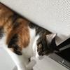 【愛猫日記】毎日アンヌさん#44