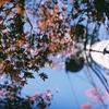 秋の日暮里をフィルムカメラ