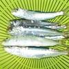 釣り日記レシピ(マイワシの梅煮)