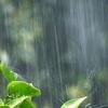 台風シーズンなのでタイフーン、ハリケーン、サイクロンの違いについて学ぶ