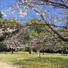 清澄庭園 in 春分