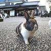 夢リスト70・石川県にある月うさぎの里へ行く