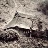 ワラ(藁)ぶき屋根