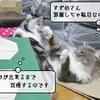 猫の道具 ~手作りダンボール猫ハウス~
