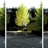 『 Tree D 』写真・・・