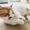 【猫学】なぜ愛しの愛猫は飼い主を噛むのか?理由と対策、わがやの噛み猫事例をシェアします。