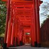 空き時間に根津神社で撮影
