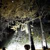 盛岡城跡公園(岩手公園)の石垣ライトアップ。盛岡・冬の風物詩。来年3月まで開催。