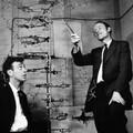 大人の科学(2) DNAとは何か? DNA発見の感動の物語