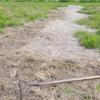 先週の藁散らしの続きです。来週も…