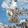 無料の郷土博物館もある千葉市のお花見スポット亥鼻公園