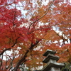 【Youtube更新】本当は教えたくない鎌倉の穴場紅葉スポット半僧坊。