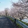 花見川往復お花見サイクリング ~印旛沼、新川、花見川