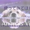 もはや英語教材|無料で高クオリティーな「3D animals view」
