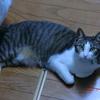 台所を通ると踏みそうおネコさま。